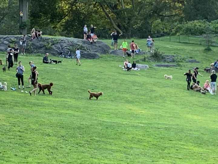 Mineral Springs in Central Park is pup paradise at 6pm.  Thank you, Summer!
