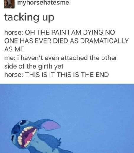 Every horse every where.