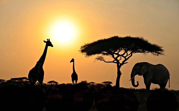 Have you ever been on a safari?